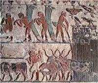 أسرار موسم الحصاد عند المصري القديم.. تقويم قمري وحساب السنة بـ«الساعات»