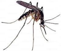 ظهور 3 حالات إصابة بفيروس زيكا في سنغافورة