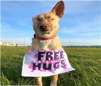 صور وفيديو| «كلبة» تقدم المساعدة للبشر بعد فقدان عينيها وإطلاق 17 رصاصة عليها