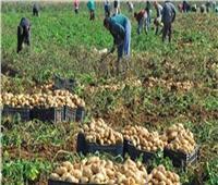 فيديو| الحاصلات الزراعية: نصدر المنتجات المصرية لـ 80 دولة عربية وأوروبية