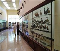 بعد إغلاقه 12 عامًا| عودة الحياة لمتحف «التاريخ الطبيعي» بالإسكندرية