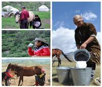 بعد إجازتها من «البحوث الإسلامية»| كازاخستان توضح منافع لحم وحليب الخيل «القمز»