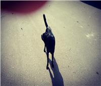 صور| «الكلاب الضالة» تهدد سكان روض الفرج