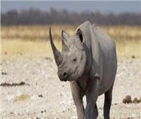 تراجع حالات الصيد الجائر لحيوان وحيد القرن في جنوب أفريقيا