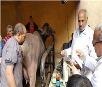 قوافل بيطرية لعلاج وتحصين الماشية بالمنيا
