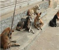 حملة لإبادة الكلاب الضالة في المنوفية