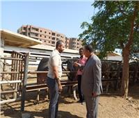 شراء 24 رأس جاموسي لتطوير مزرعة محافظة أسيوط لإنتاج الألبان واللحوم