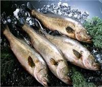 «التموين» تطرح الأسماك المجمدة بأسعار أقل 40% عن الأسواق