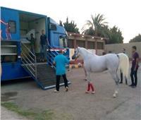 الخيول والأسماك والحجر الزراعي.. تتصدر ملفات اللجنة المصرية الأردنية