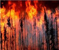 روسيا تعلن إخماد جميع الحرائق في البلاد