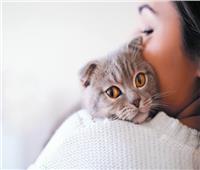 الحيوانات الأليفة بمصر.. كيف تتعامل مع القطط والكلاب أثناء مرضها؟