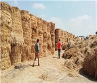 «البيئة»: تنفذ ١٢٤٩ ندوة توعوية وتحرير ١٢٦ محضر حرق مخلفات زراعية