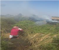 8 سيارات إطفاء للسيطرة على حرائق قش الأرز بالبحيرة