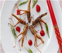 «سوسيس» بالصرصور وآيس كريم بالحشرات.. بدائل غذائية للحوم