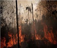 الأمطار تساعد في إخماد حرائق غابات بوليفيا المستعرة منذ شهرين