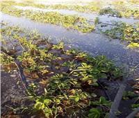 بالصور| غرق مساحات كبيرة من أراضي قرية ابو الخاوى بكوم حمادة