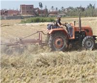 ممدوح غراب: حصاد 200 ألف فدان أرز بالشرقية