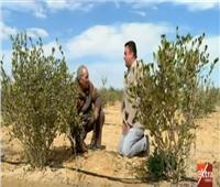 شاهد  مزارع يوضح الفرق بين الأراضي الطينية والصحراوية