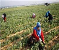 فيديو| القومي للمرأة: 50% من العمالة في الأراضي الزراعية سيدات