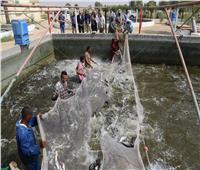 محافظ قنا: بيع الأسماك للمواطنين بأسعار مخفضة في المنافذ