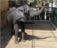 فيديو| حديقة الحيوان بدون «فيل» لأول مرة بالتاريخ.. والأطفال يسألون عن «نعيمة»