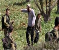 الاحتلال الإسرائيلي يطرد قاطفي الزيتون من أراضيهم بجنوب نابلس