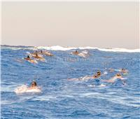 البحر الأحمر .. «مالديف الشــــــرق» (ملف)
