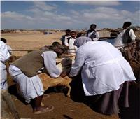 محافظ قنا: «مصر الخير» تعالج 2168 رأس ماشية بفرشوط