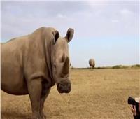 مبادرة مصور سويدي للحياة البريةلحماية الحيوانات من الانقراض