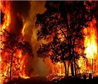 إعلان حالة الطوارئ بولاية «نيو ساوث ويلز» الاسترالية جراء حرائق الغابات