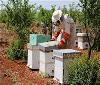 «الانقراض» يلدغ النحل المصري.. نهاية العالم تقترب