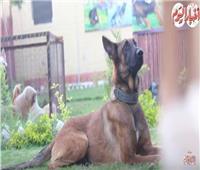 فيديو|  أفضل أنواع كلاب الحراسة بضمان المدرب «أبو نور»