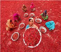 «بحر الفلفل الأحمر».. عادة «بنجلاديش» كل عام