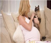 للحامل.. كيف تحمي نفسك من داء القطط؟