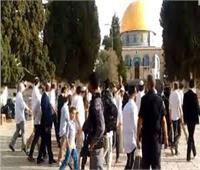 الخارجية الفلسطينية: أعمال المستوطنين الإرهابية تندرج ضمن مخطط استعماري