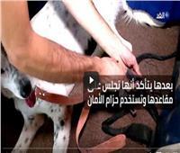 فيديو| أرجنتيني يخصص حافلة لمنح الكلاب نزهة حرة في بلدته