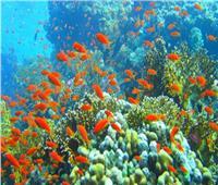 «غرفة الغوص» توضح فرض رسوم زيارة محميات جنوب سيناء