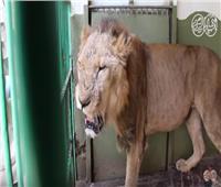 فيديو.. حكاية «الحج متولي» في حديقة الحيوان