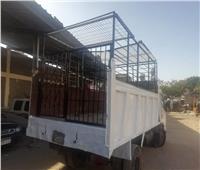 رئيس حي السيدة زينب: «سيارة مجهزة للقضاء على الكلاب الضالة»