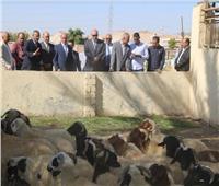 محافظ قنا ورئيس الجهاز المركزي للتعمير يتفقدان مشروعات الأمن الغذائي