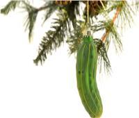 عادات غريبة.. تعرف على سبب وضع «مخلل» على شجرة الكريسماس
