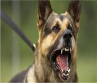 تجديد حبس خفير لاتهامه بإطلاق كلب شرس وإصابة طفلين في حلوان