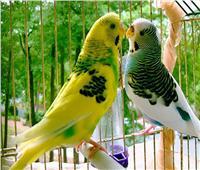 لعشاق طيور الزينة.. نصائح ذهبية للرعاية والتغذية السليمة في الشتاء