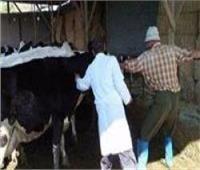 «الزراعة» تحصين 9.2 مليون رأس ماشية ضد «الحمى القلاعية»