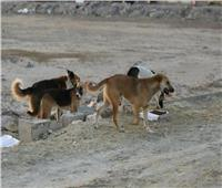 «الزراعة» تنفي إعدام 295 ألف كلب خلال عام 2019