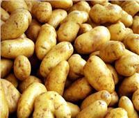 الحكومة تنفي استخدام مبيدات ومواد كيماوية ضارة في تخزين تقاوي البطاطس