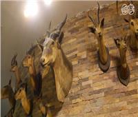 فيديو| المتحف الحيواني.. هياكل كائنات نادرة ومنقرضة تروي تاريخ الطبيعة