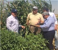 حصاد 2019| «الزراعة» حصر وتصنيف الأراضي للمشروعات الزراعية