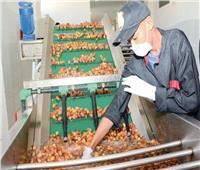 «الزراعة»: زيادة القيمة المضافة لصناعة التمور.. ولدينا 15 مليون نخلة