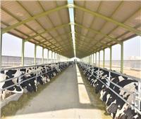 مشروعات الإنتاج الحيواني ودعم المربيين تحقق طفرة كبيرة